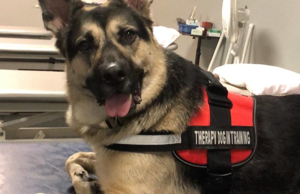 Meet Leo, registered Therapy Dog